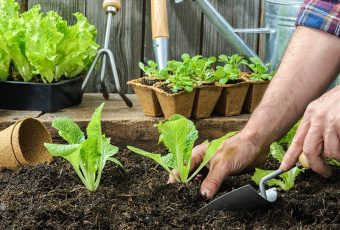 How To Get Your Garden Started