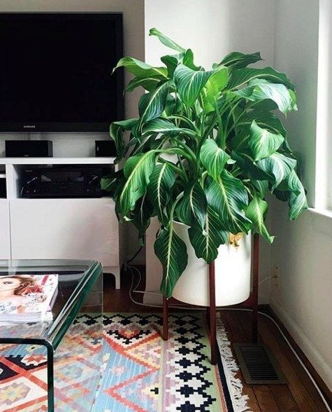 Not Enough Light But Cant Pass Over Having Plants This Is How You Can Grow Plants That Need Sunlight At Home