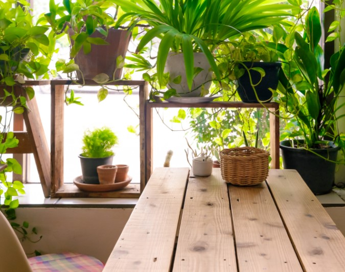 Placing The Indoor Plants At Your Home Some Useful Tips
