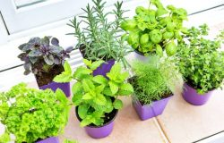 Plants That Are Easy To Grow In Winter