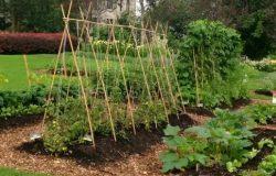 Some Amazing Tips & Tricks To Maintain Your Veggies Garden