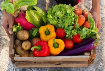 Some Vegetables You Can Grow At Home