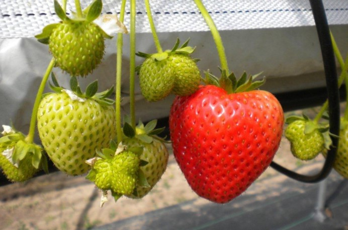 Fruit You Can Grow At Home